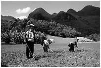 Dzao women raking the fields, near Tuan Giao. Northwest Vietnam (black and white)