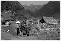 Plowing the fields with a water buffalo close to a hut, near Tuan Giao. Northwest Vietnam (black and white)