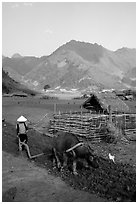 Woman plows a field  close to a hut, near Tuan Giao. Northwest Vietnam (black and white)