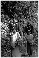 Montagnard women carrying bamboo sections, near Lai Chau. Northwest Vietnam ( black and white)