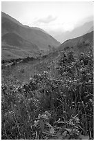 Wildflowers and mountains in the Tram Ton Pass area. Northwest Vietnam (black and white)