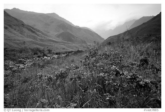 Wildflowers and mountains in the Tram Ton Pass area. Sapa, Vietnam (black and white)
