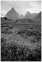 Wildflowers and peaks in the Tram Ton Pass area. Sapa, Vietnam ( black and white)