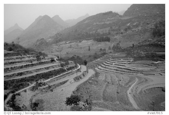 Dry cultivated terraces. Bac Ha, Vietnam