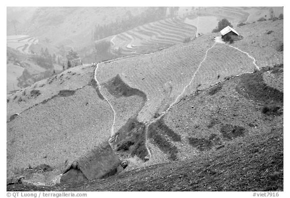 Dry cultivated terraces. Vietnam (black and white)