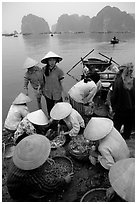 Women gathering around fresh fish catch. Halong Bay, Vietnam (black and white)