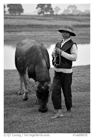 Boy wearing the Boi Doi military hat popular in the North, with water buffalo, near Ninh Binh. Vietnam (black and white)