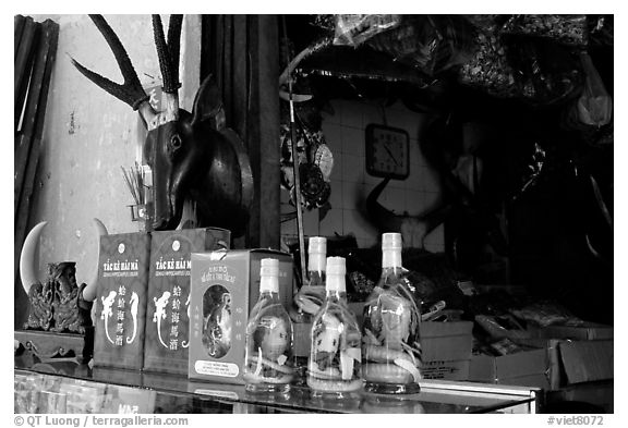 Traditional medicine is still favored by the population. A sample of traditional medicine items. Cholon, Ho Chi Minh City, Vietnam (black and white)