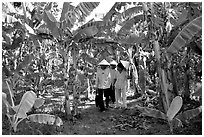 Banana tree plantation in the fertile lands, Ben Tre. Mekong Delta, Vietnam (black and white)