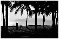 Palm-tree fringed beach, Nha Trang. Vietnam (black and white)
