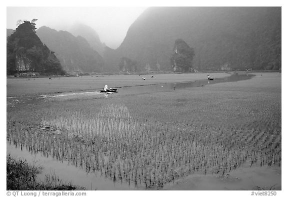 Rice fields, river, and misty mountains of Tam Coc. Ninh Binh,  Vietnam (black and white)