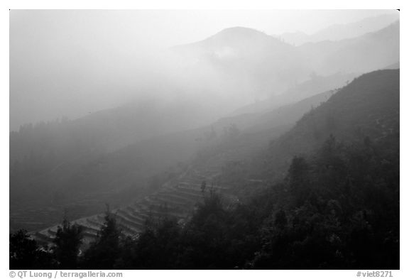 Morning fog on terraced rice fields. Sapa, Vietnam (black and white)