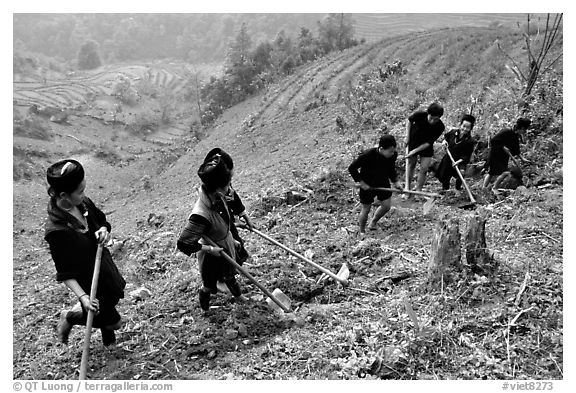 Hmong people working on terraces. Sapa, Vietnam (black and white)