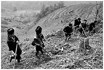 Hmong people working on terraces. Sapa, Vietnam ( black and white)