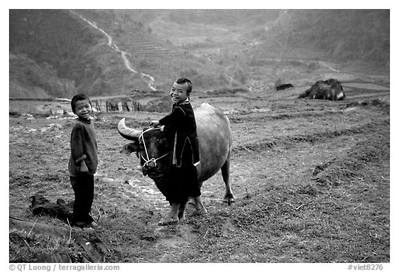 Playing with the water buffalo. Sapa, Vietnam (black and white)