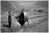 Playing with the water buffalo. Sapa, Vietnam ( black and white)