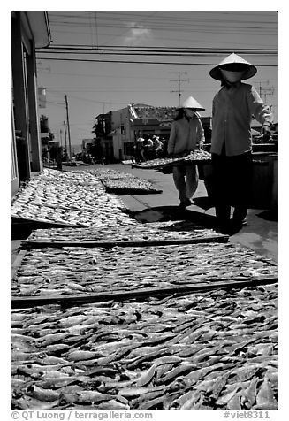 Women carrying a panel of fish being dried. Vung Tau, Vietnam (black and white)