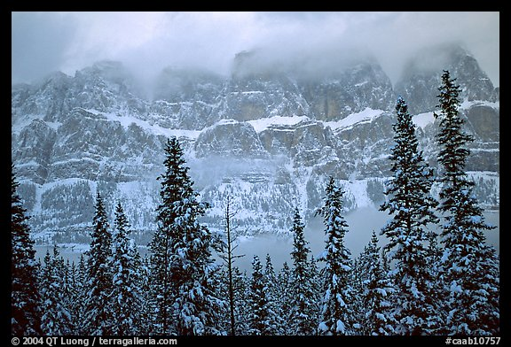 Conifers and steep rock face in winter. Banff National Park, Canadian Rockies, Alberta, Canada