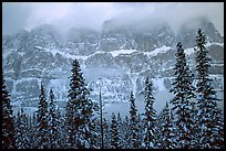 Conifers and steep rock face in winter. Banff National Park, Canadian Rockies, Alberta, Canada (color)