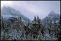 Conifer sand foggy peaks in winter. Banff National Park, Canadian Rockies, Alberta, Canada (color)