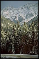 Snowy forest and mountains in storm light seen from the road. Banff National Park, Canadian Rockies, Alberta, Canada