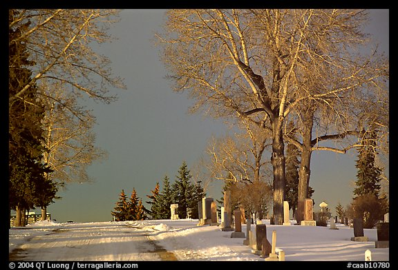 Cemetery in winter. Calgary, Alberta, Canada (color)
