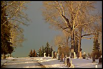 Cemetery in winter. Calgary, Alberta, Canada ( color)