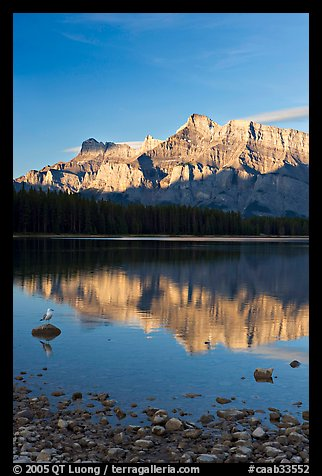 Mount Rundle reflected in Two Jack Lake, early morning. Banff National Park, Canadian Rockies, Alberta, Canada (color)