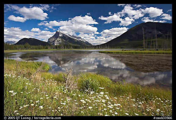 Summer flowers on the shore of first Vermillion Lake, afternon. Banff National Park, Canadian Rockies, Alberta, Canada