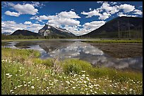 Summer flowers on the shore of first Vermillion Lake, afternon. Banff National Park, Canadian Rockies, Alberta, Canada (color)