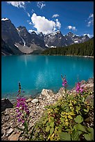 Fireweed and Moraine Lake, late morning. Banff National Park, Canadian Rockies, Alberta, Canada (color)