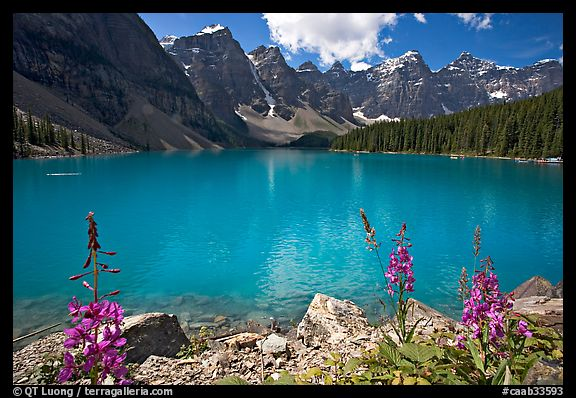 Fireweed and turquoise waters of Moraine Lake, late morning. Banff National Park, Canadian Rockies, Alberta, Canada