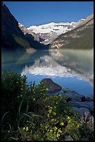 Yellow flowers, Victoria Peak, and Lake Louise, morning. Banff National Park, Canadian Rockies, Alberta, Canada