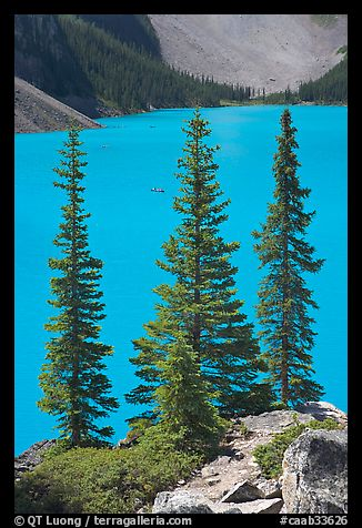 Spruce trees and turquoise blue waters of Moraine Lake , mid-morning. Banff National Park, Canadian Rockies, Alberta, Canada (color)