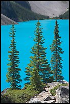Spruce trees and turquoise blue waters of Moraine Lake , mid-morning. Banff National Park, Canadian Rockies, Alberta, Canada