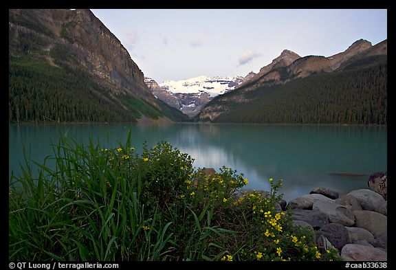 Yellow flowers, Victoria Peak, and Lake Louise, dawn. Banff National Park, Canadian Rockies, Alberta, Canada (color)