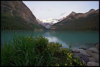 Yellow flowers, Victoria Peak, and Lake Louise, dawn. Banff National Park, Canadian Rockies, Alberta, Canada