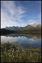 Wildflowers, Herbert Lake and  Bow range, morning. Banff National Park, Canadian Rockies, Alberta, Canada