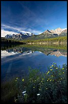Yellow flowers and Bow range reflected in Herbert Lake, early morning. Banff National Park, Canadian Rockies, Alberta, Canada