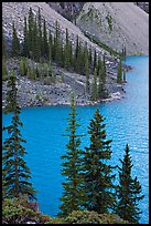 Conifers and blue waters of Moraine Lake. Banff National Park, Canadian Rockies, Alberta, Canada (color)