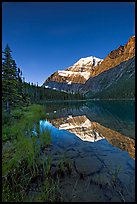 Mt Edith Cavell reflected in Cavell Lake, sunrise. Jasper National Park, Canadian Rockies, Alberta, Canada
