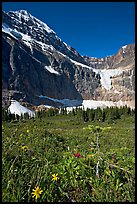 Wildflowers on Cavell Meadows, and Mt Edith Cavell. Jasper National Park, Canadian Rockies, Alberta, Canada
