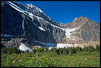 Cavell Meadows, Mt Edith Cavell, and Angel Glacier, morning. Jasper National Park, Canadian Rockies, Alberta, Canada ( color)