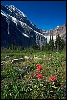 Alpine meadow and Paintbrush below Mt Edith Cavell. Jasper National Park, Canadian Rockies, Alberta, Canada ( color)