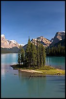 Evergreens on Spirit Island, Maligne Lake, afternoon. Jasper National Park, Canadian Rockies, Alberta, Canada