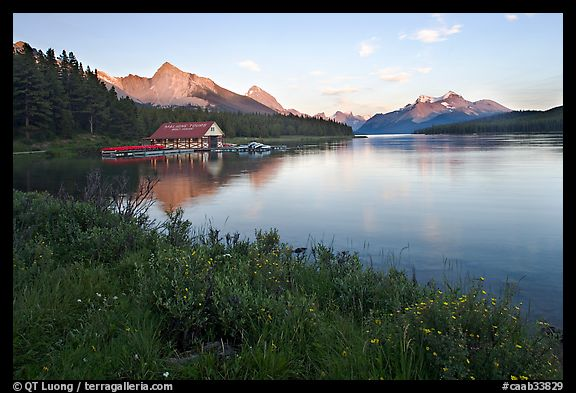 Wildflowers, Maligne Lake and boathouse, sunset. Jasper National Park, Canadian Rockies, Alberta, Canada
