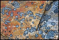 Close-up of rock with lichen. Jasper National Park, Canadian Rockies, Alberta, Canada ( color)