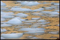 Close-up of icebergs floating in reflected yellow light. Jasper National Park, Canadian Rockies, Alberta, Canada