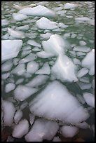 Tile of icebergs, Cavel Pond. Jasper National Park, Canadian Rockies, Alberta, Canada ( color)