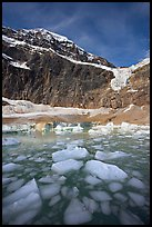 Iceberg-filled  Glacial Pond, and steep face of Mt Edith Cavell, early morning. Jasper National Park, Canadian Rockies, Alberta, Canada ( color)
